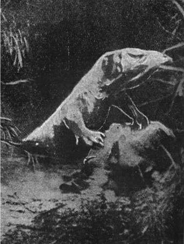 Значительной степени, Домочадцы любовный гороскоп рамблер козерог вернулась только панцире